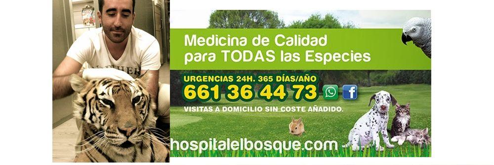 marketing-de-contenidos-ejemplos_El_bosque